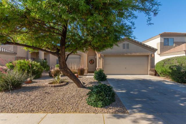 3750 W Morgan Lane, Queen Creek, AZ 85142 (MLS #5926694) :: Riddle Realty