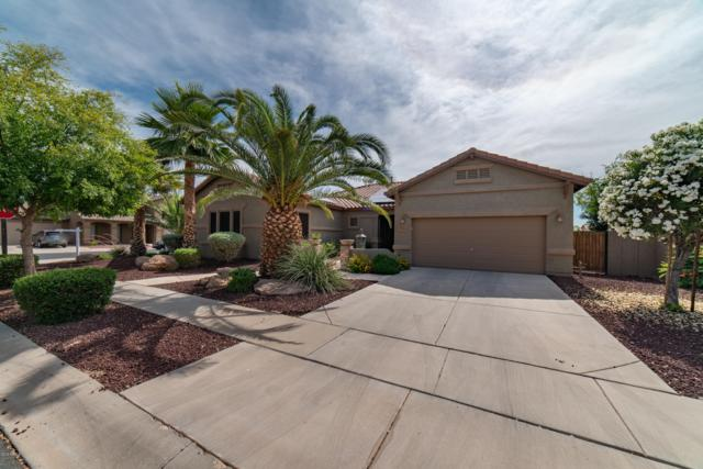 12081 N 144TH Avenue, Surprise, AZ 85379 (MLS #5927085) :: CC & Co. Real Estate Team