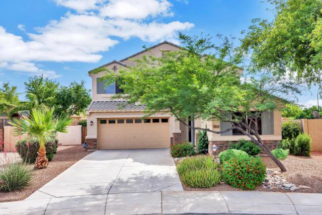 2820 E Charlotte Drive, Phoenix, AZ 85024 (MLS #5927815) :: CC & Co. Real Estate Team