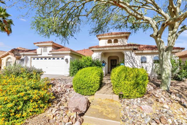 23728 S Stoney Lake Drive, Sun Lakes, AZ 85248 (MLS #5927892) :: CC & Co. Real Estate Team