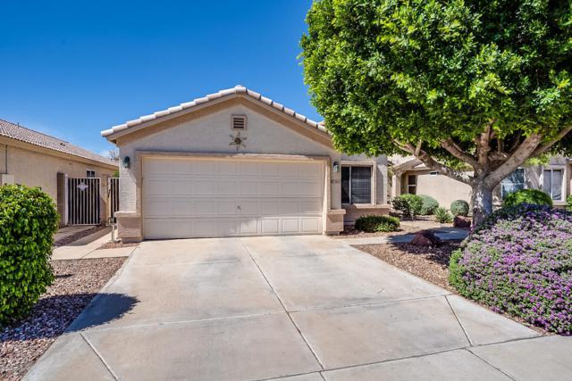 3612 W Questa Drive, Glendale, AZ 85310 (MLS #5927956) :: Scott Gaertner Group