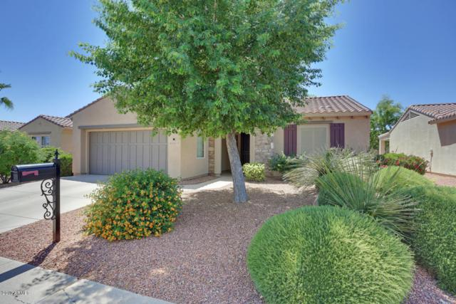 22212 N Arrellaga Drive, Sun City West, AZ 85375 (MLS #5928203) :: Occasio Realty