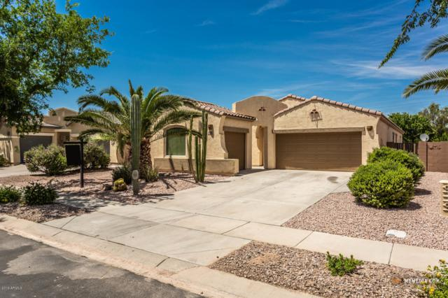 682 E Las Colinas Place, Chandler, AZ 85249 (MLS #5928745) :: The Kenny Klaus Team
