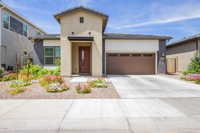 1530 W Bruce Avenue, Gilbert, AZ 85233 (MLS #5928923) :: CC & Co. Real Estate Team