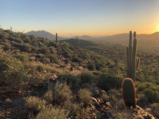 42231 N Fleming Springs Road, Cave Creek, AZ 85331 (MLS #5928924) :: Brett Tanner Home Selling Team