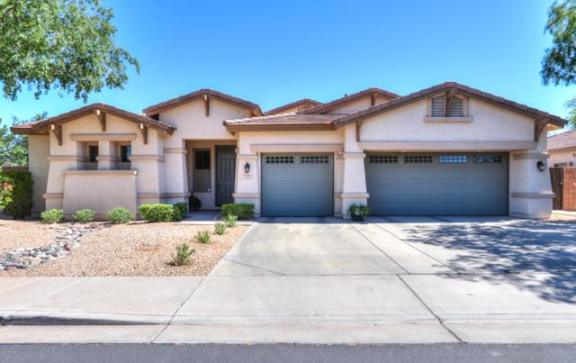 425 W Seagull Drive, Chandler, AZ 85286 (MLS #5930409) :: CC & Co. Real Estate Team