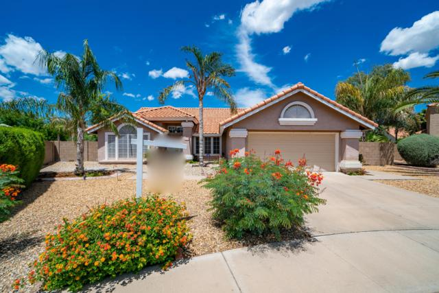 1320 N Ash Court, Chandler, AZ 85224 (MLS #5930419) :: Relevate | Phoenix