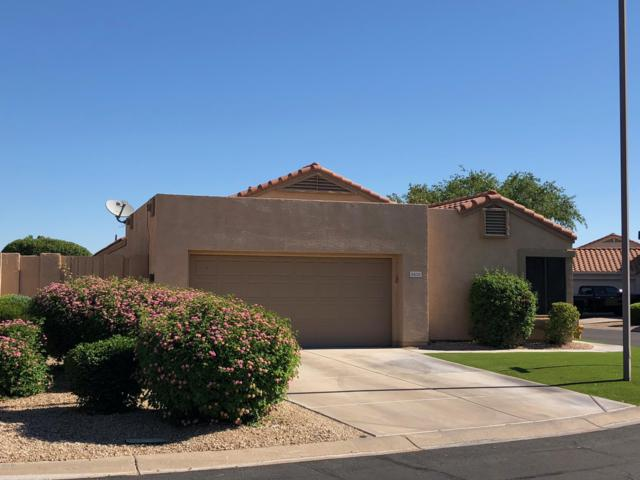 8626 W Mauna Loa Lane, Peoria, AZ 85381 (MLS #5931197) :: The Laughton Team