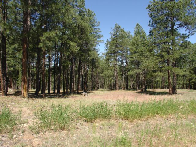 2013 Cecil Richardson, Flagstaff, AZ 86005 (MLS #5931201) :: The Daniel Montez Real Estate Group