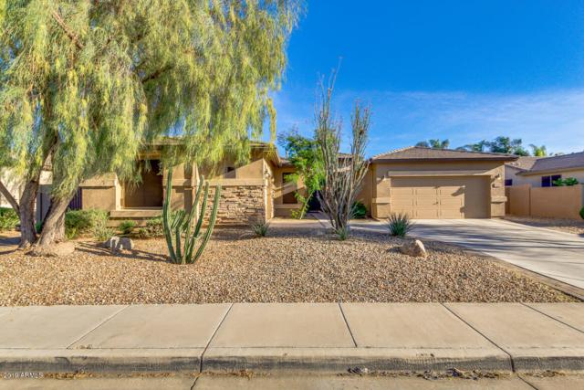 3455 E Mead Drive, Chandler, AZ 85249 (MLS #5931462) :: Keller Williams Realty Phoenix