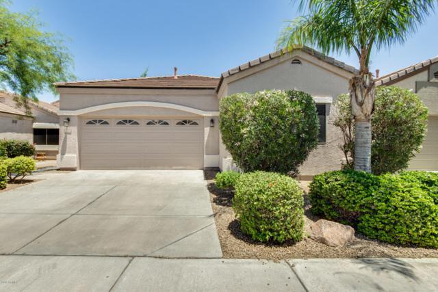 3244 E Maldonado Drive, Phoenix, AZ 85042 (MLS #5934352) :: Revelation Real Estate