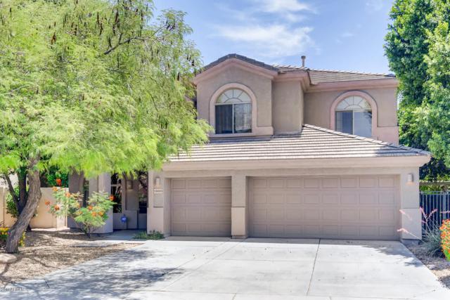 13603 W Holly Street, Goodyear, AZ 85395 (MLS #5939569) :: Yost Realty Group at RE/MAX Casa Grande