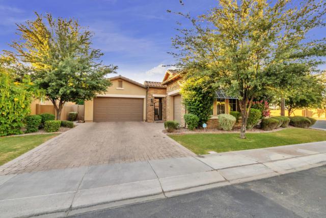 1138 W Tonto Place, Chandler, AZ 85248 (MLS #5939629) :: Keller Williams Realty Phoenix