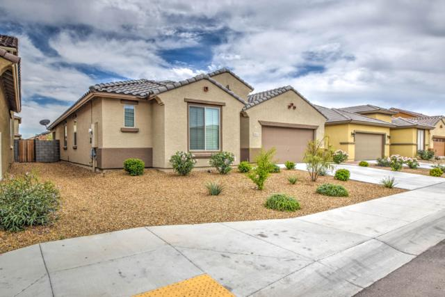 10233 W Golden Lane, Peoria, AZ 85345 (MLS #5940429) :: Lucido Agency