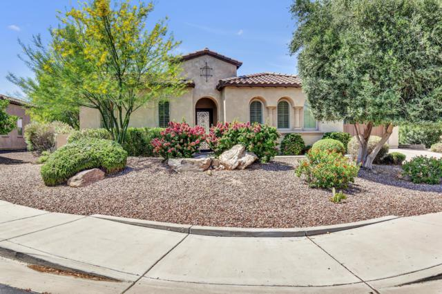 27250 N 127TH Drive, Peoria, AZ 85383 (MLS #5940677) :: Occasio Realty