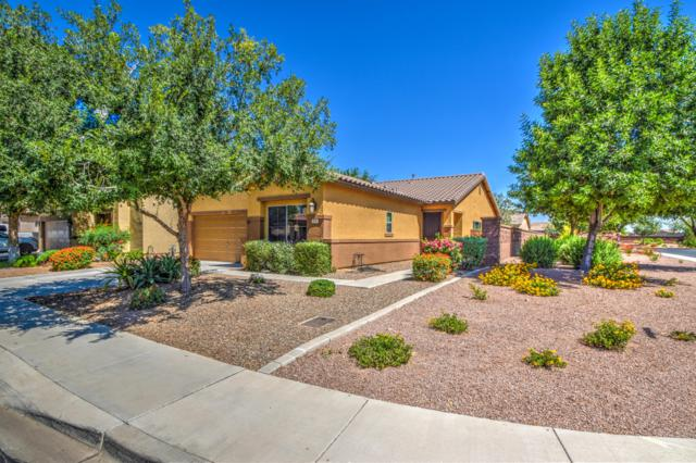 636 W Trellis Road, San Tan Valley, AZ 85140 (MLS #5941549) :: Occasio Realty
