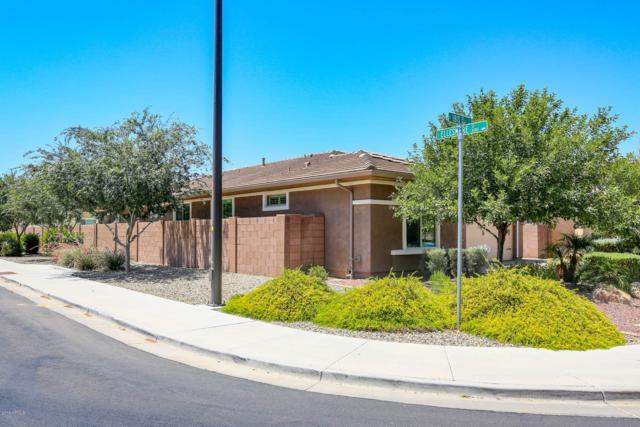 1171 E Ibis Street, Gilbert, AZ 85297 (MLS #5942004) :: Lucido Agency
