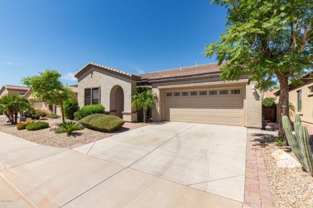4056 E Donato Drive, Gilbert, AZ 85298 (MLS #5943824) :: The Pete Dijkstra Team