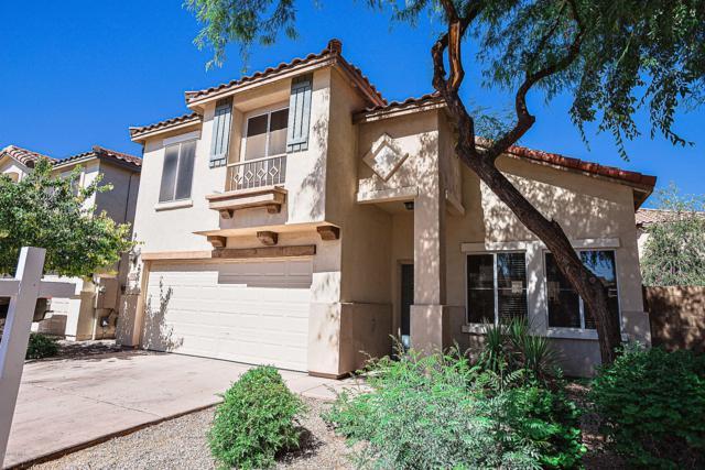 668 E Colt Court, Chandler, AZ 85225 (MLS #5944016) :: Power Realty Group Model Home Center