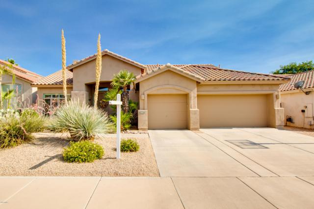 9867 E Winchcomb Drive, Scottsdale, AZ 85260 (MLS #5944094) :: Power Realty Group Model Home Center