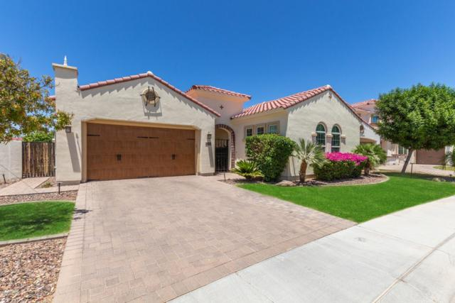 2448 W Hope Circle, Chandler, AZ 85248 (MLS #5944437) :: The Property Partners at eXp Realty