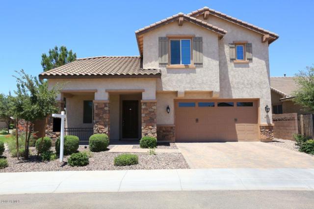 236 E Coconino Drive, Chandler, AZ 85249 (MLS #5945984) :: Relevate | Phoenix