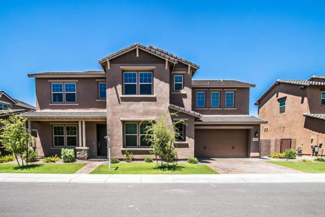 922 W Glacier Drive, Chandler, AZ 85248 (MLS #5947872) :: The Daniel Montez Real Estate Group
