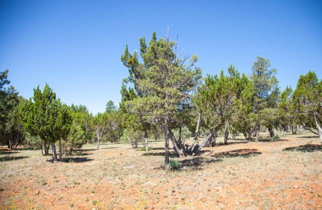 2764 Panther Circle, Overgaard, AZ 85933 (MLS #5948314) :: Devor Real Estate Associates