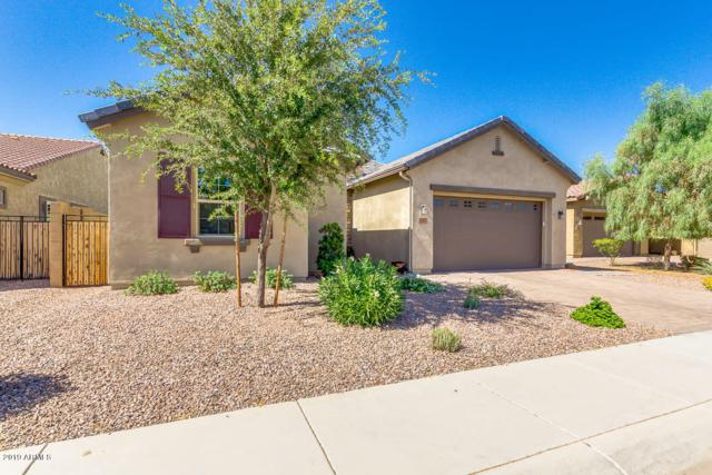 850 E Tonto Place, Chandler, AZ 85249 (MLS #5948844) :: Revelation Real Estate