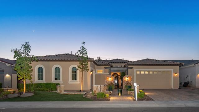 3330 S Buckskin Way, Chandler, AZ 85286 (MLS #5949090) :: Revelation Real Estate