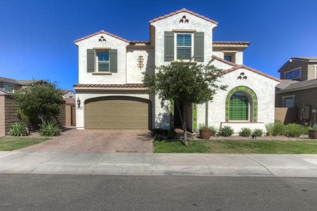 4221 S Barberry Drive, Chandler, AZ 85248 (MLS #5950734) :: The Daniel Montez Real Estate Group