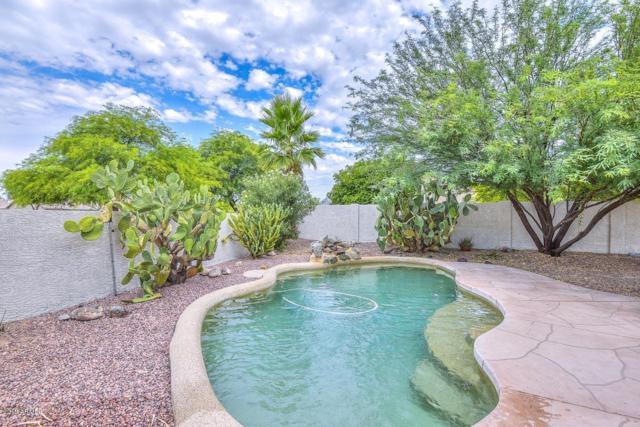 3624 W Questa Drive, Glendale, AZ 85310 (MLS #5951495) :: The Laughton Team