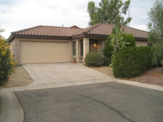 724 E Rose Marie Lane, Phoenix, AZ 85022 (MLS #5951896) :: CC & Co. Real Estate Team
