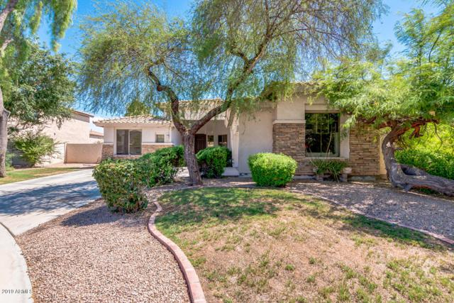 1303 E Elgin Place, Chandler, AZ 85225 (MLS #5952567) :: Power Realty Group Model Home Center