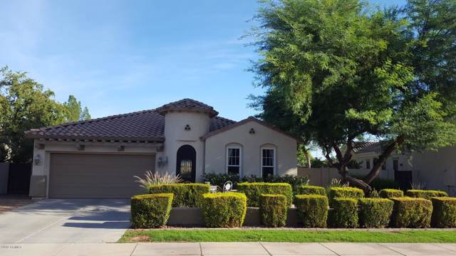 2048 E Hackberry Place, Chandler, AZ 85286 (MLS #5993162) :: Yost Realty Group at RE/MAX Casa Grande