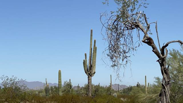 0 W Dune Shadow (Lot 34) Road, Maricopa, AZ 85139 (MLS #5996475) :: The AZ Performance PLUS+ Team