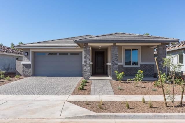 12320 N 146TH Lane, Surprise, AZ 85379 (MLS #5998122) :: Revelation Real Estate