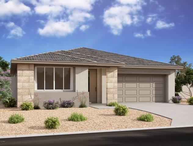 831 E Marblewood Way, Phoenix, AZ 85048 (MLS #6019231) :: Yost Realty Group at RE/MAX Casa Grande