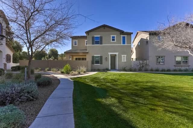 2487 N 149TH Lane, Goodyear, AZ 85395 (MLS #6033526) :: Conway Real Estate