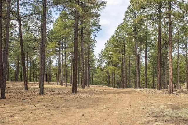 0 N Belle Springs Road, Flagstaff, AZ 86001 (MLS #6039183) :: Conway Real Estate