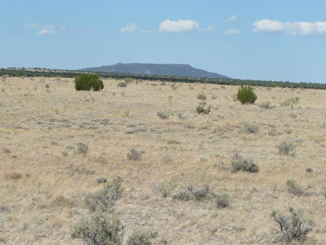 CCR Unit 6 Lot 771, Heber, AZ 85928 (MLS #6046041) :: Conway Real Estate