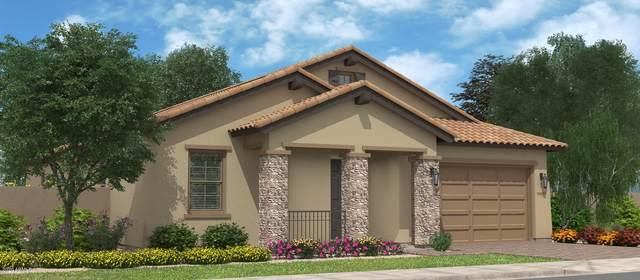 1379 W Buckwheat Avenue, Queen Creek, AZ 85140 (MLS #6048572) :: Revelation Real Estate