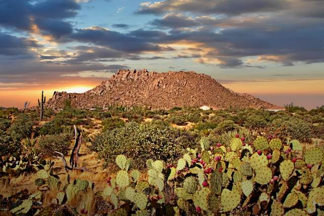 11699 E Quartz Rock Road, Scottsdale, AZ 85255 (MLS #6049067) :: Howe Realty
