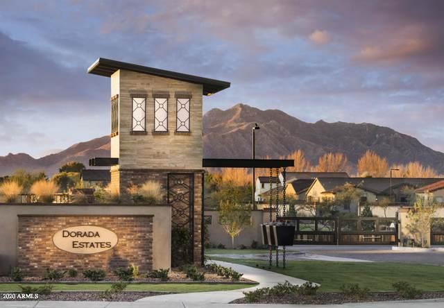 17660 E Appaloosa Court E, Queen Creek, AZ 85142 (MLS #6051217) :: Revelation Real Estate