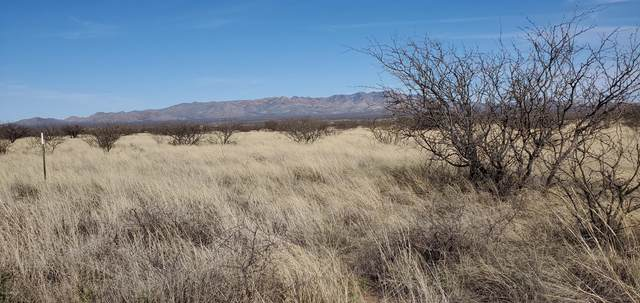 lot 3 S Rio Santiago, Hereford, AZ 85615 (MLS #6058715) :: The Bill and Cindy Flowers Team