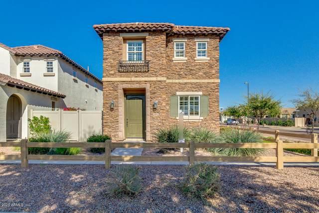 3832 S Verbena Avenue, Gilbert, AZ 85297 (MLS #6059473) :: Relevate | Phoenix