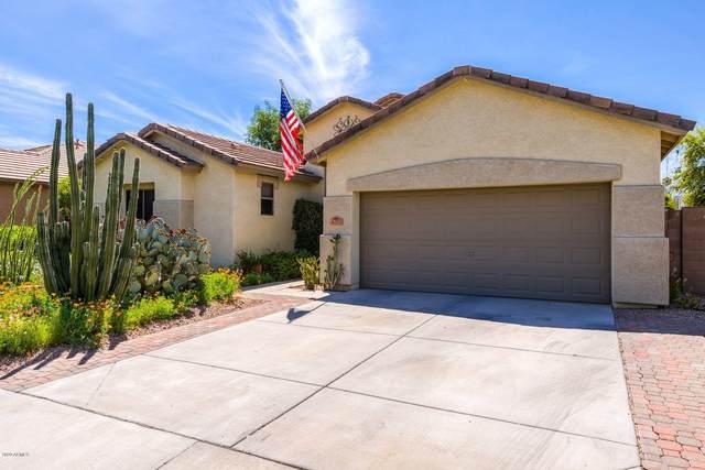 4283 E Torrey Pines Lane, Chandler, AZ 85249 (MLS #6062454) :: Revelation Real Estate