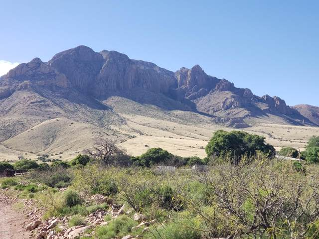 TBD E Sulphur Canyon Road, Portal, AZ 85632 (MLS #6074205) :: Yost Realty Group at RE/MAX Casa Grande