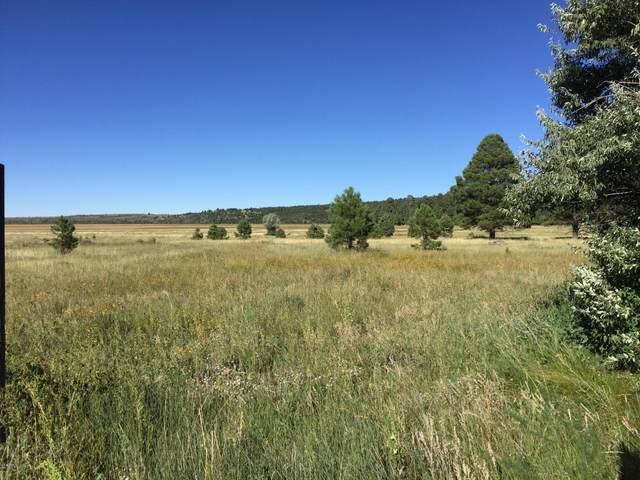 455 Why Worry Lane, Mormon Lake, AZ 86038 (MLS #6080212) :: Lifestyle Partners Team