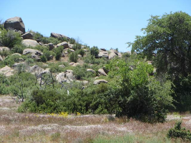 17563 W Foothill Road, Yarnell, AZ 85362 (MLS #6082390) :: The C4 Group